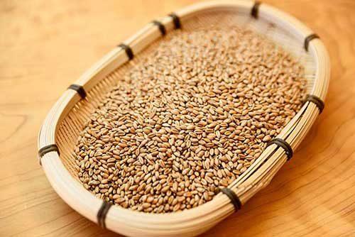 天然酵母パン麦